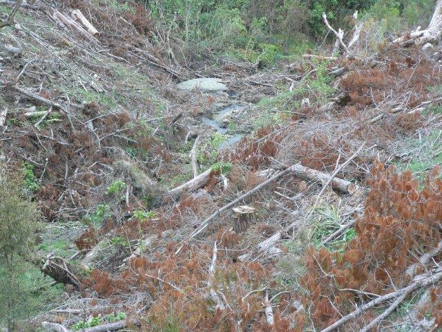 Top of river catchment polluted with pine